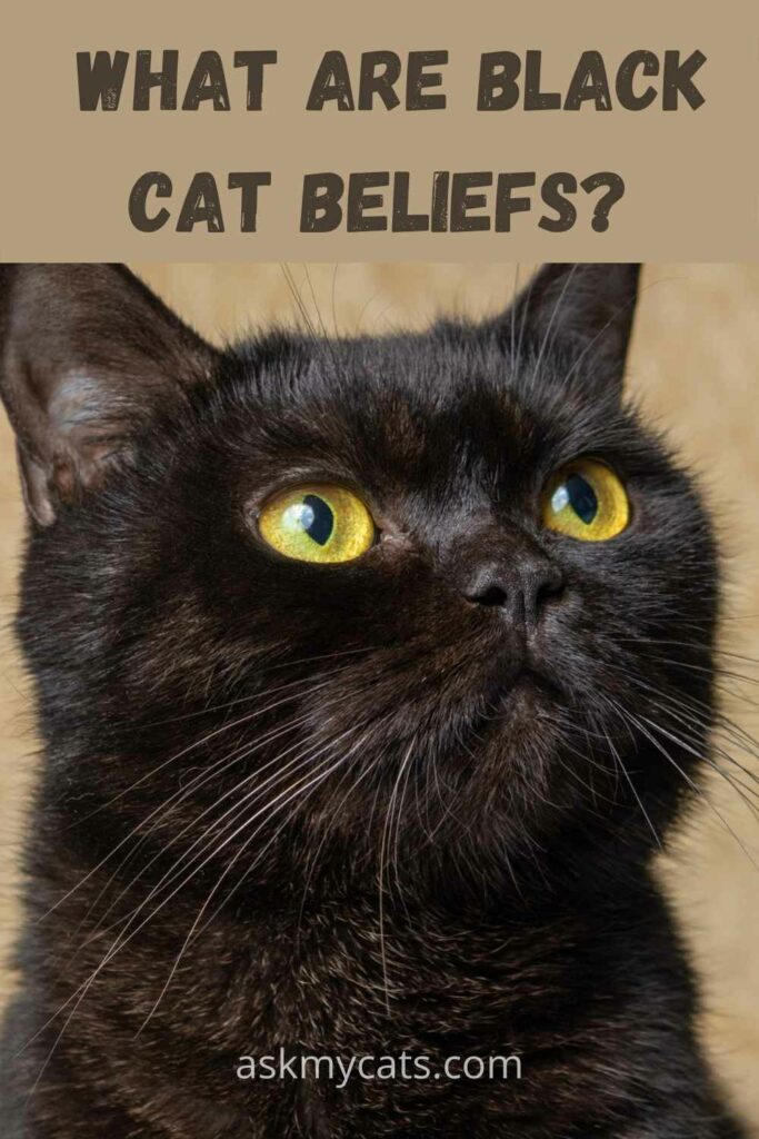 what are black cat beliefs?