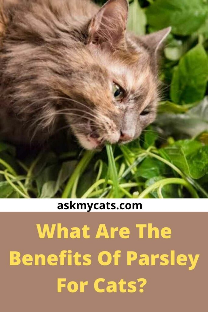 What Are The Benefits Of Parsley For Cats?