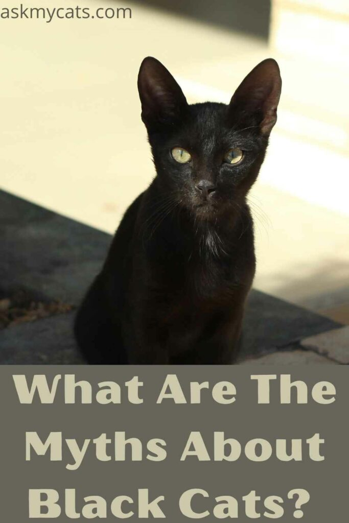 what are the myths about black cats