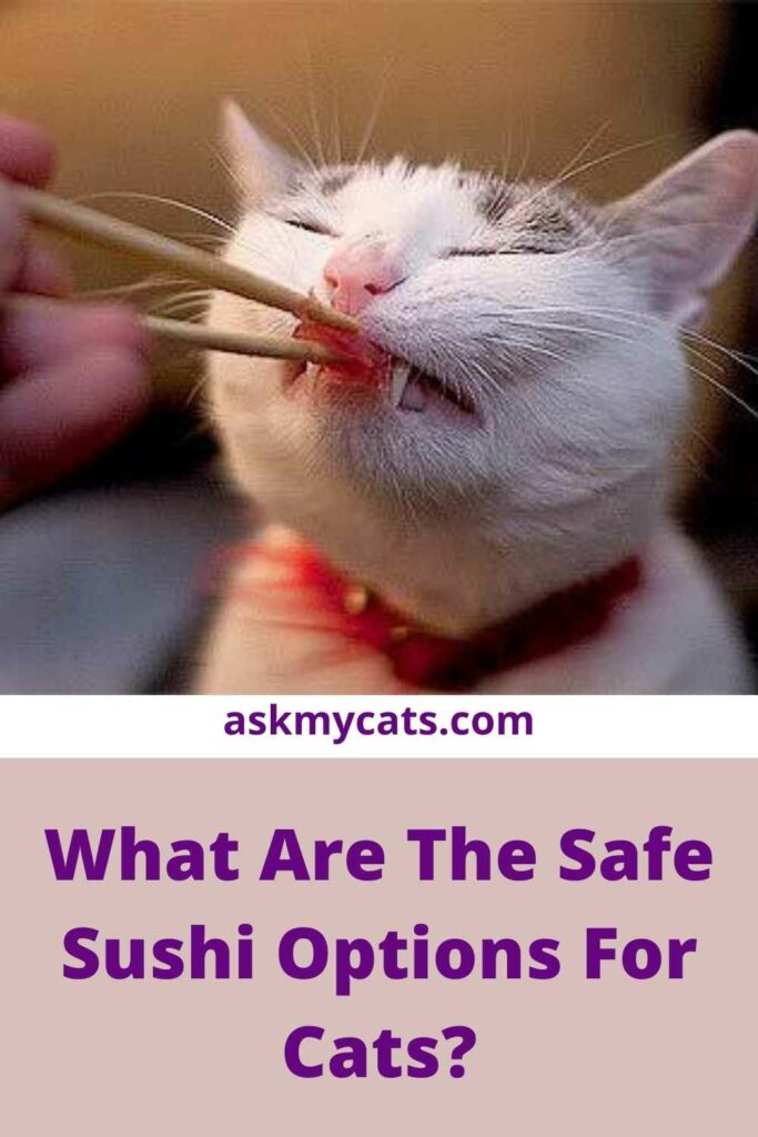 What Are The Safe Sushi Options For Cats?