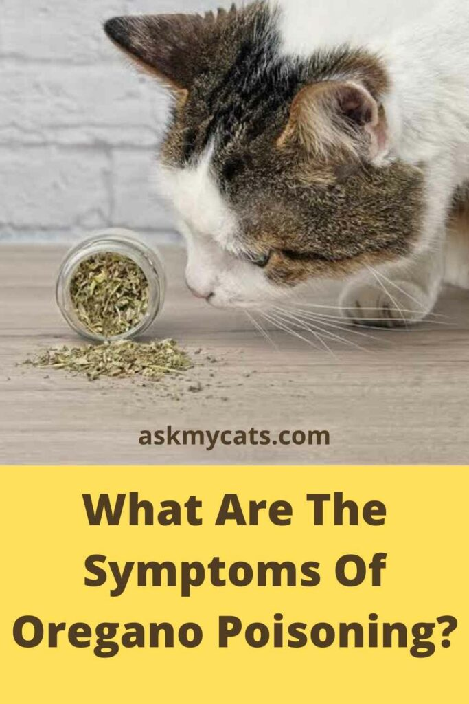 What Are The Symptoms Of Oregano Poisoning?