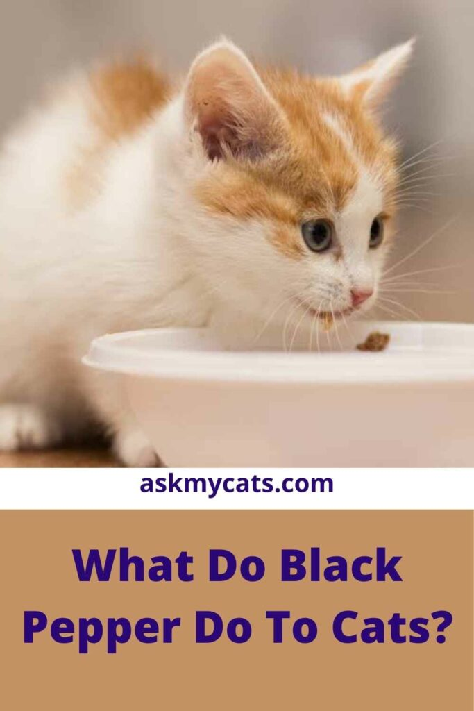 What Do Black Pepper Do To Cats?