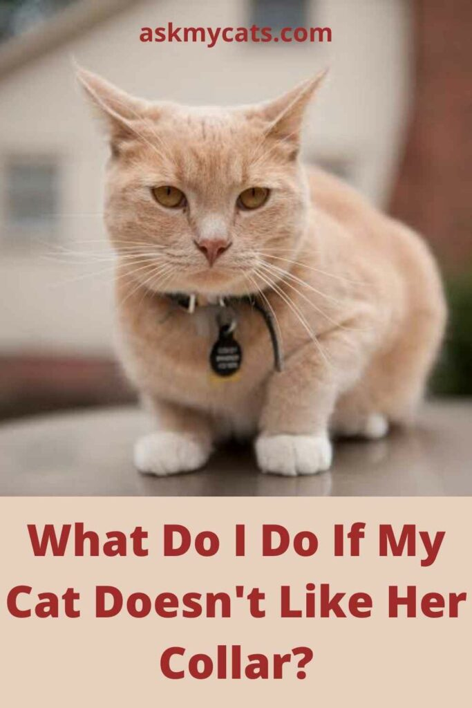 What Do I Do If My Cat Doesn't Like Her Collar?