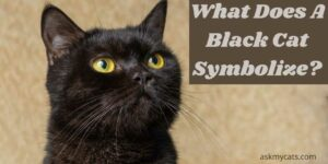 What Does A Black Cat Symbolize? Find Spiritual Meaning Of Black Cat
