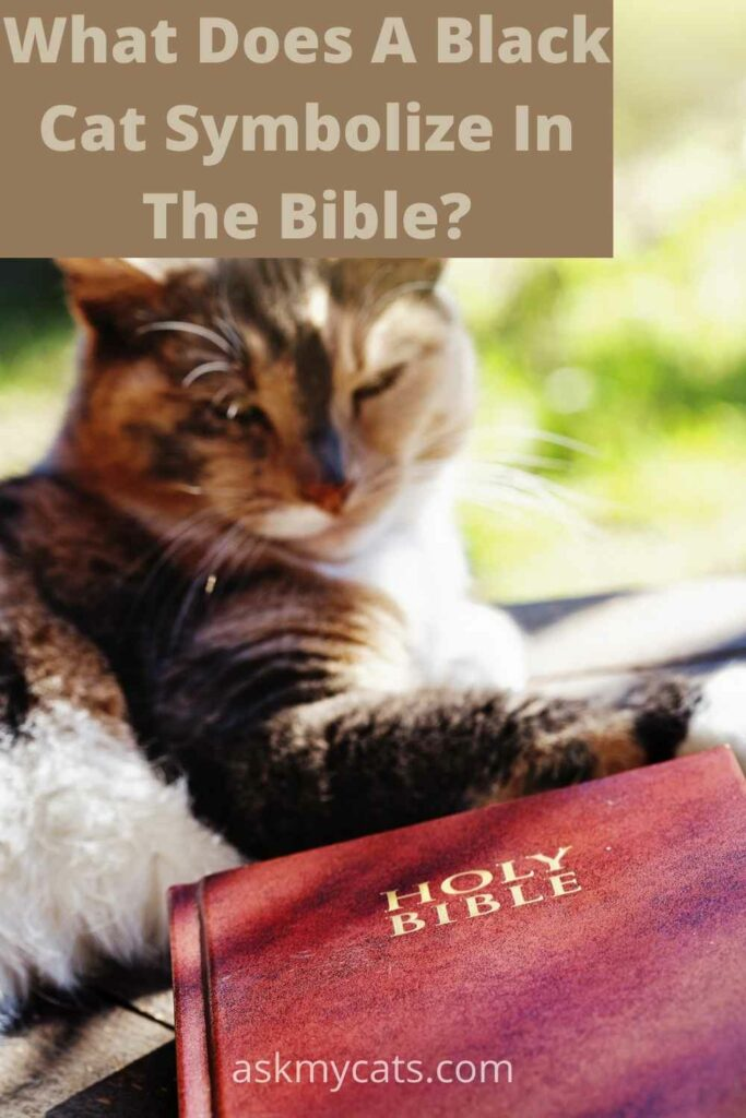 what does a black cat symbolize in the bible