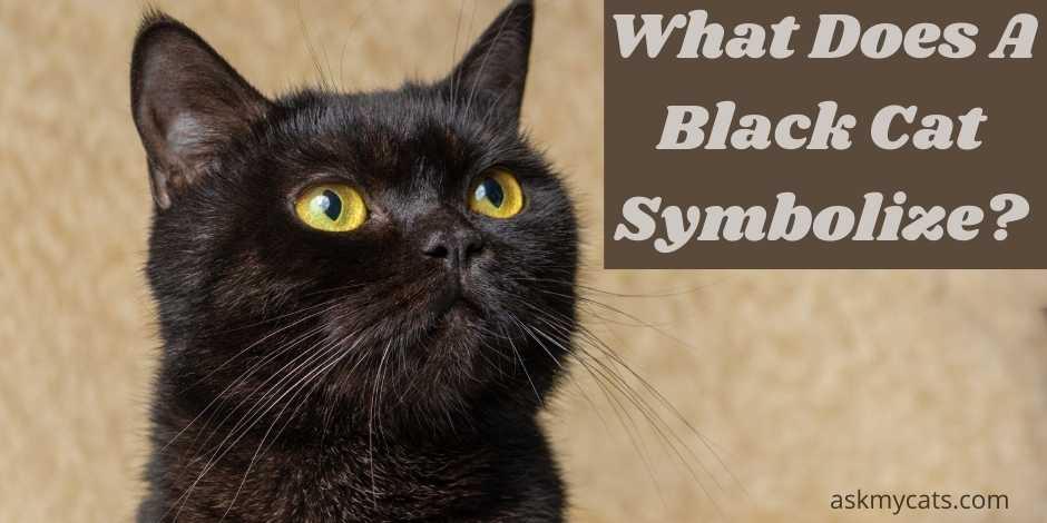 what does a black cat symbolize