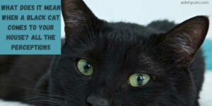 What Does It Mean When A Black Cat Comes To Your House? All The Perceptions