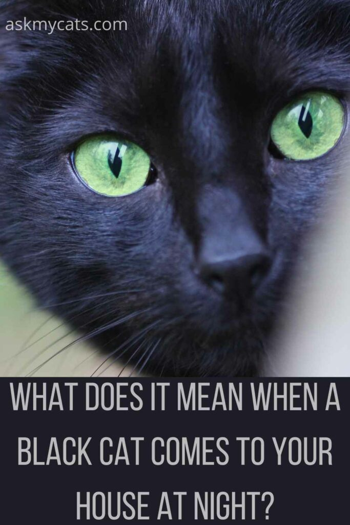 what does it mean when a black cat comes to your house at night?