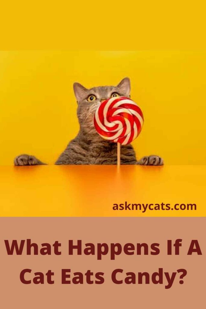 What Happens If A Cat Eats Candy?