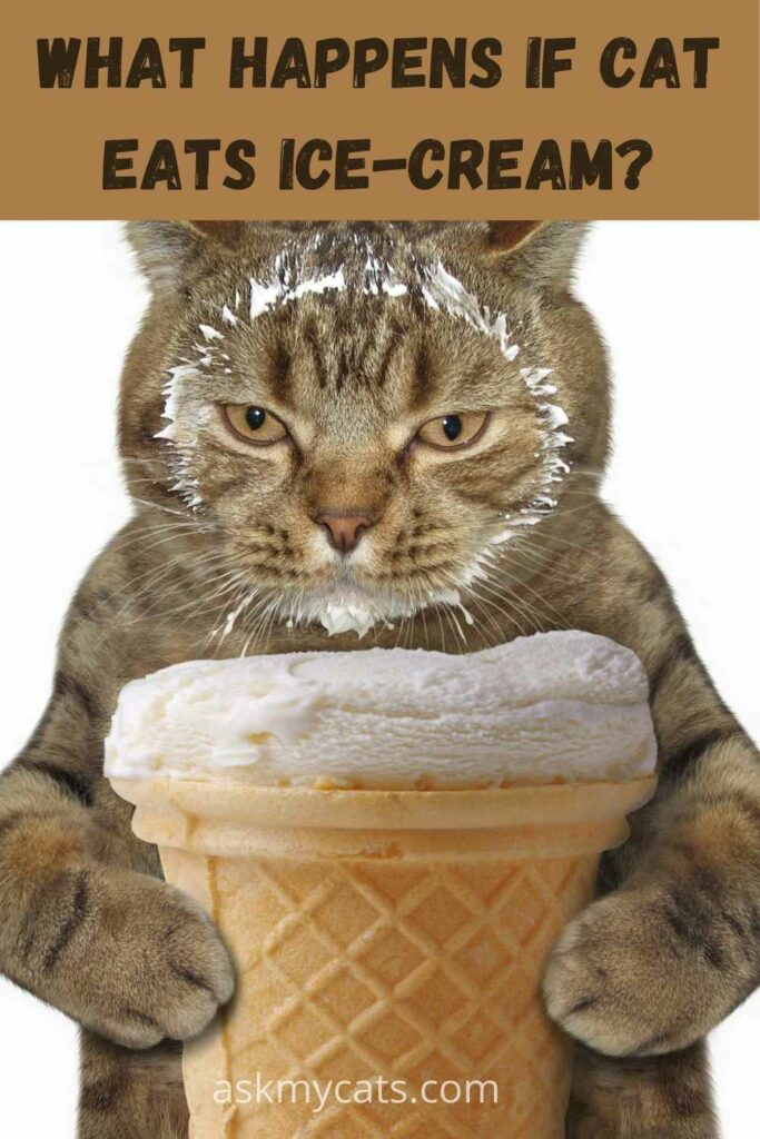 What Happens If Cat Eats Ice Cream