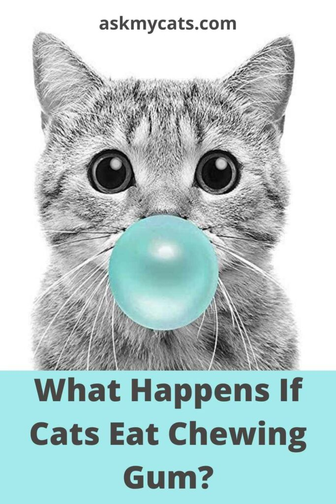 What Happens If Cats Eat Chewing Gum?