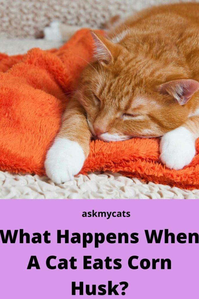 What Happens when A Cat Eats Corn Husk?