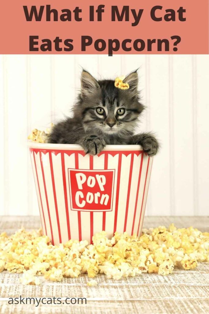 what if my cat eats popcorn?