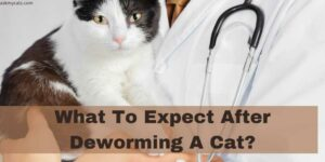What To Expect After Deworming A Cat?