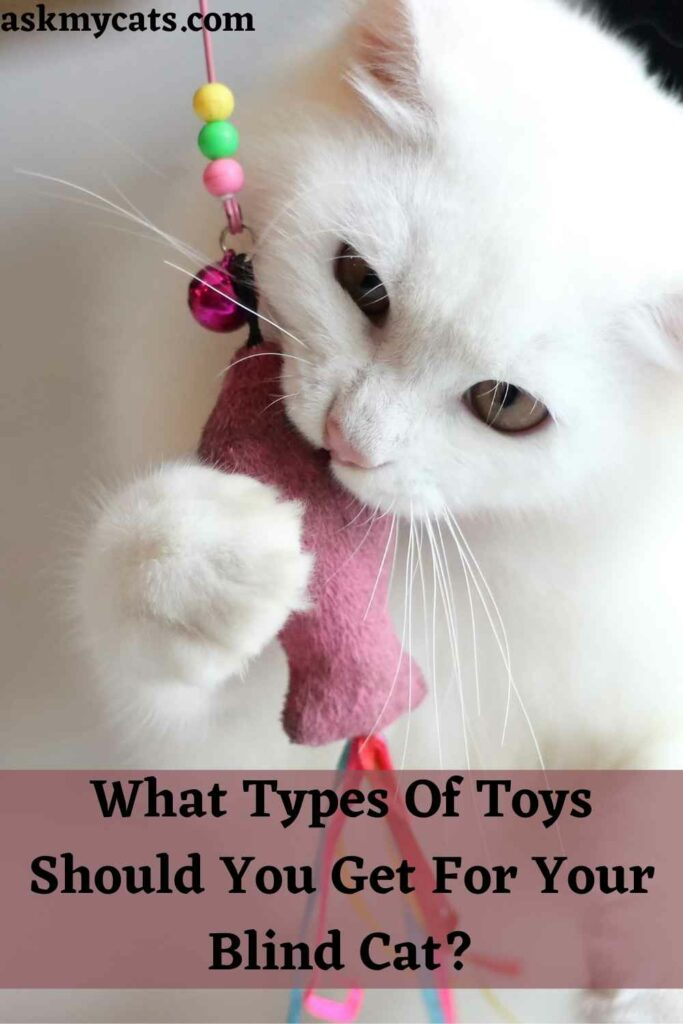 What Types Of Toys Should You Get For Your Blind Cat?