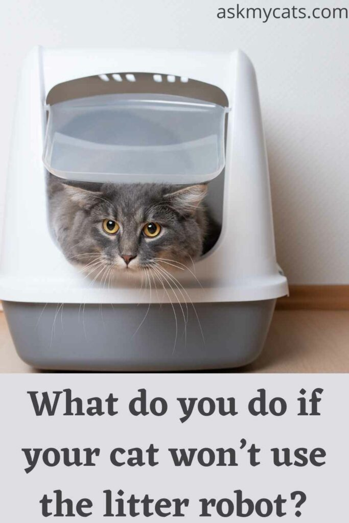 what do you do if your cat wont use the litter robot