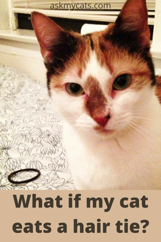 what if my cat eats a hair tie