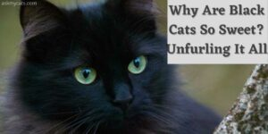 Why Are Black Cats So Sweet? Unfurling It All