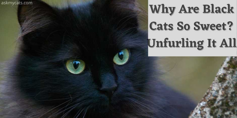 why black cats are so sweet? unfurling it all