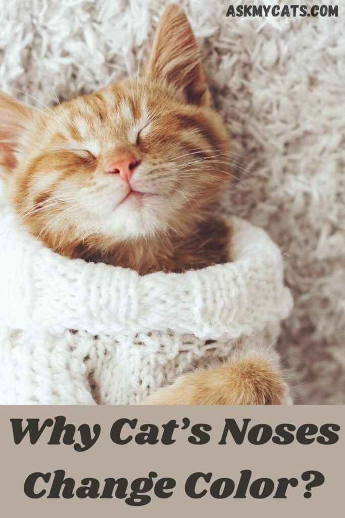 why cats noses change color?