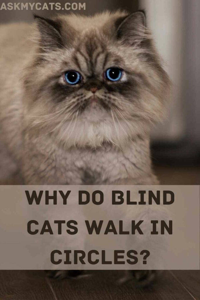 Why Do Blind Cats Walk In Circles?