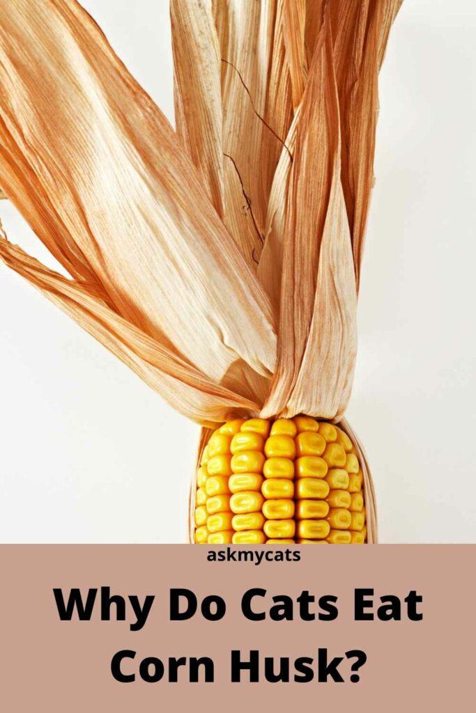 Why Do Cats Eat Corn Husk?