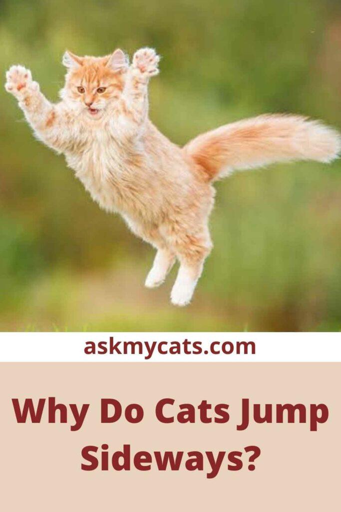 Why Do Cats Jump Sideways?