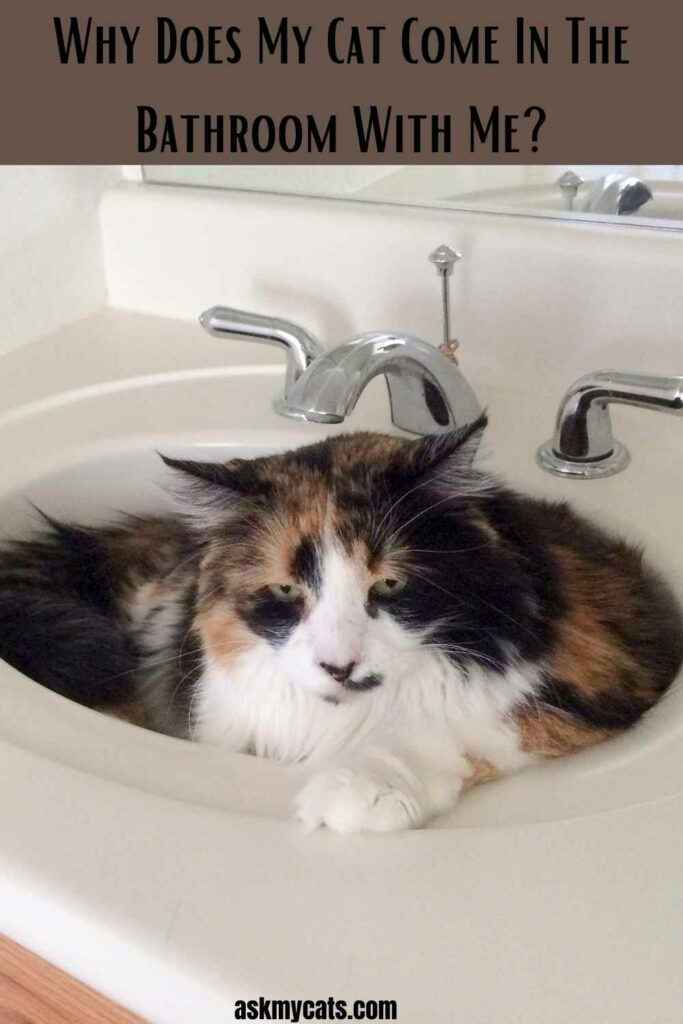 Why Does My Cat Come In The Bathroom With Me?