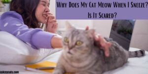 Why Does My Cat Meow When I Sneeze? Is It Scared?