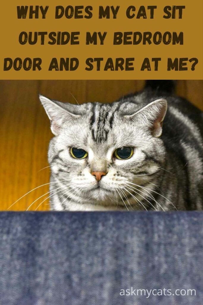Why Does My Cat Sit Outside My Bedroom Door And Stare At Me?