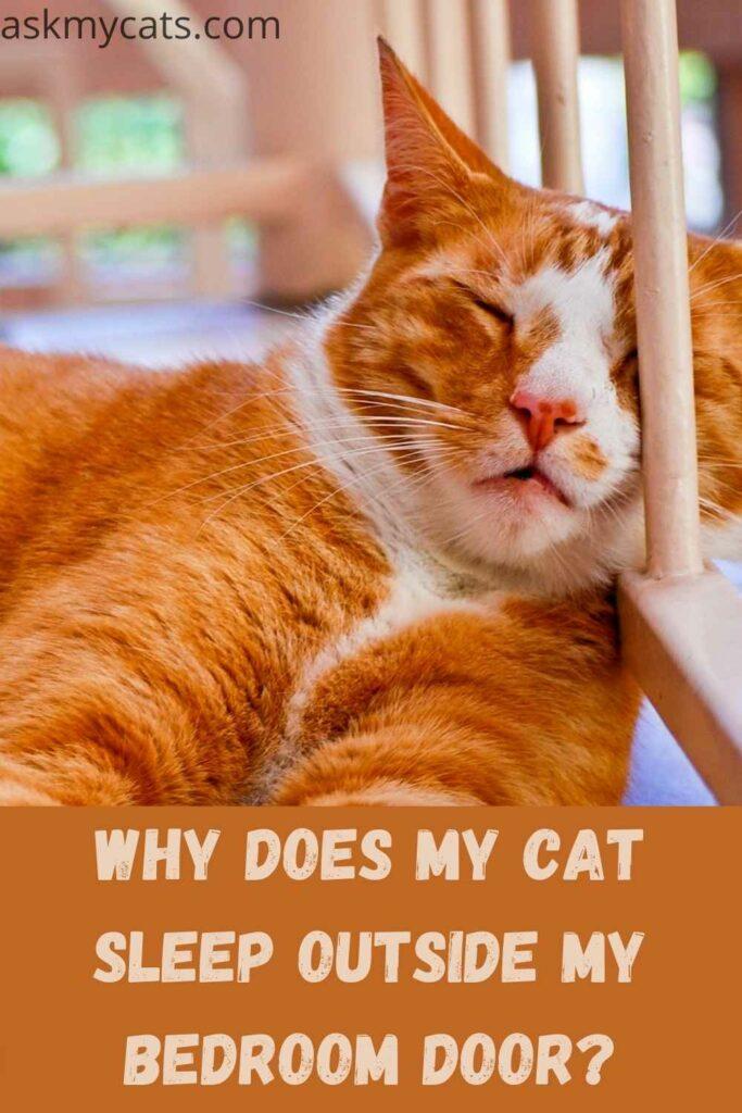 Why Does My Cat Sleep Outside My Bedroom Door?