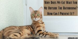 Why Does My Cat Wait Outside The Bathroom? 11 Curious And Fun Reasons!
