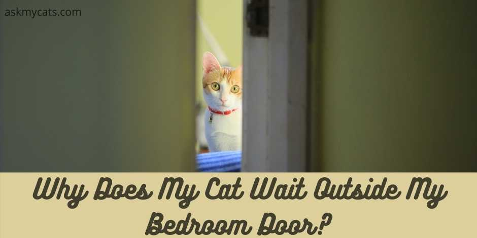 Why Does My Cat Wait Outside My Bedroom Door?