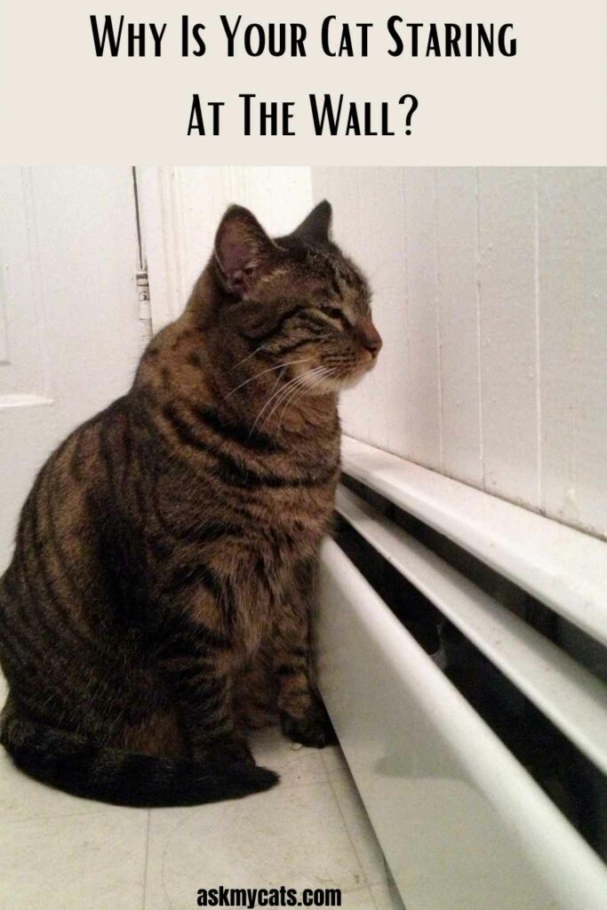 Why Is Your Cat Staring At The Wall?