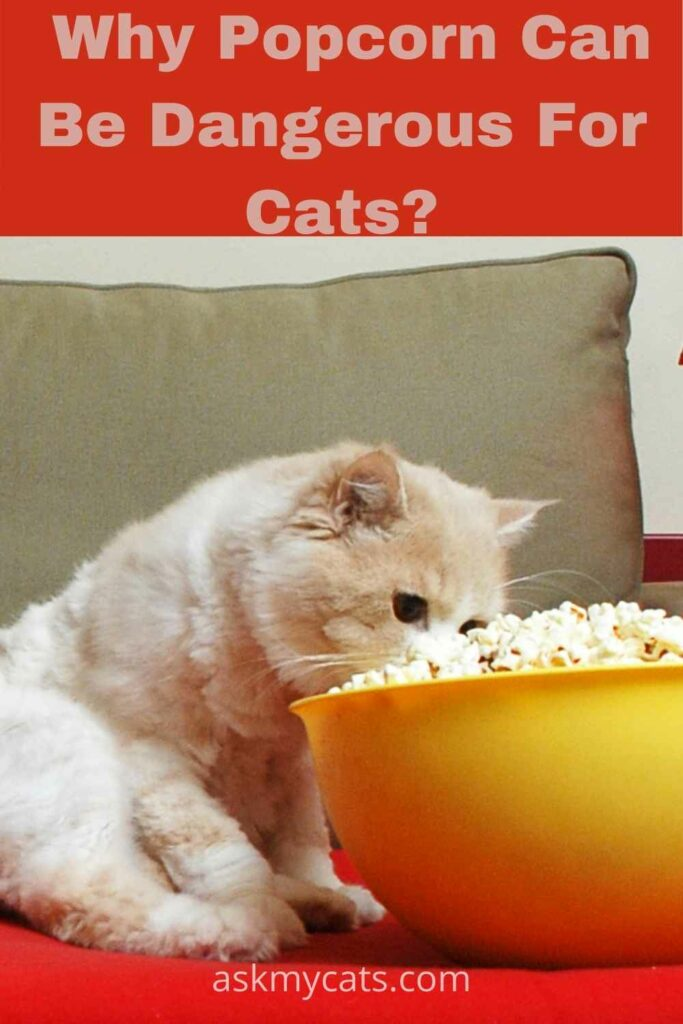 why popcorn can be dangerous for cats?
