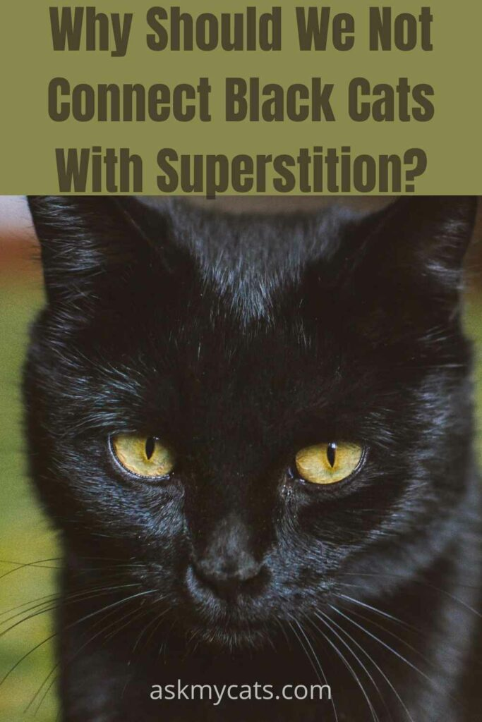 why should we not connect black cats with superstition?