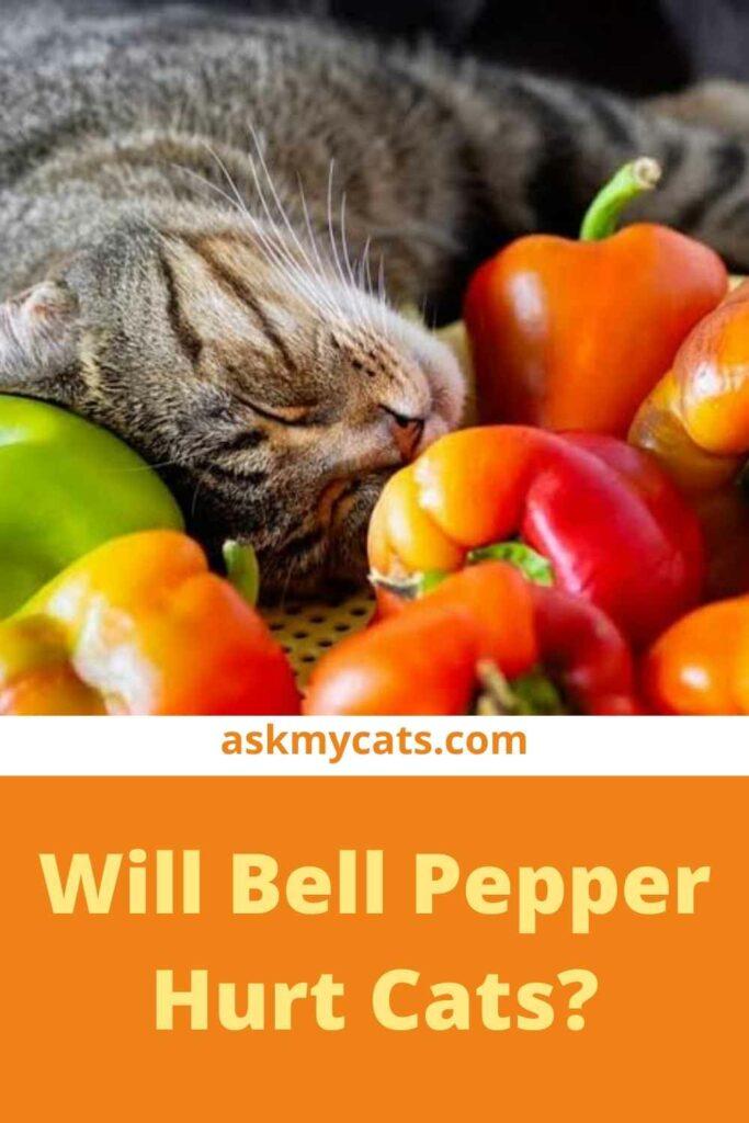 Will Bell Pepper Hurt Cats?