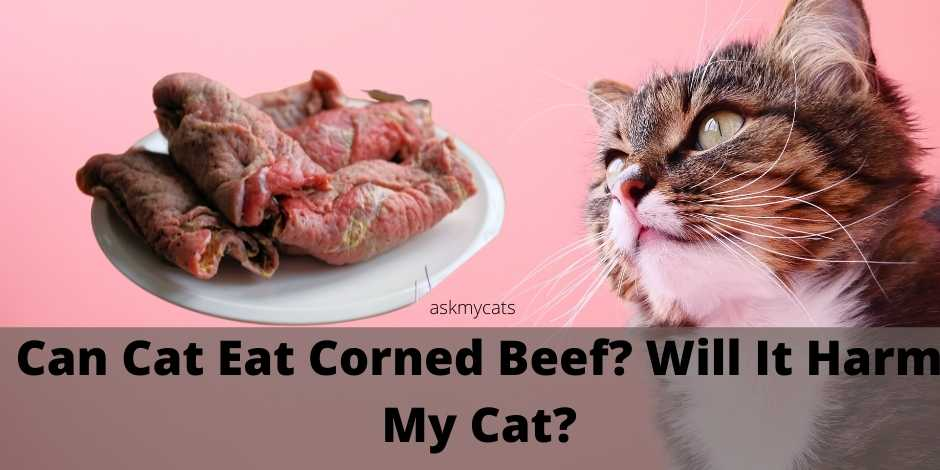 Can Cat Eat Corned Beef? Will It Harm My Cat?