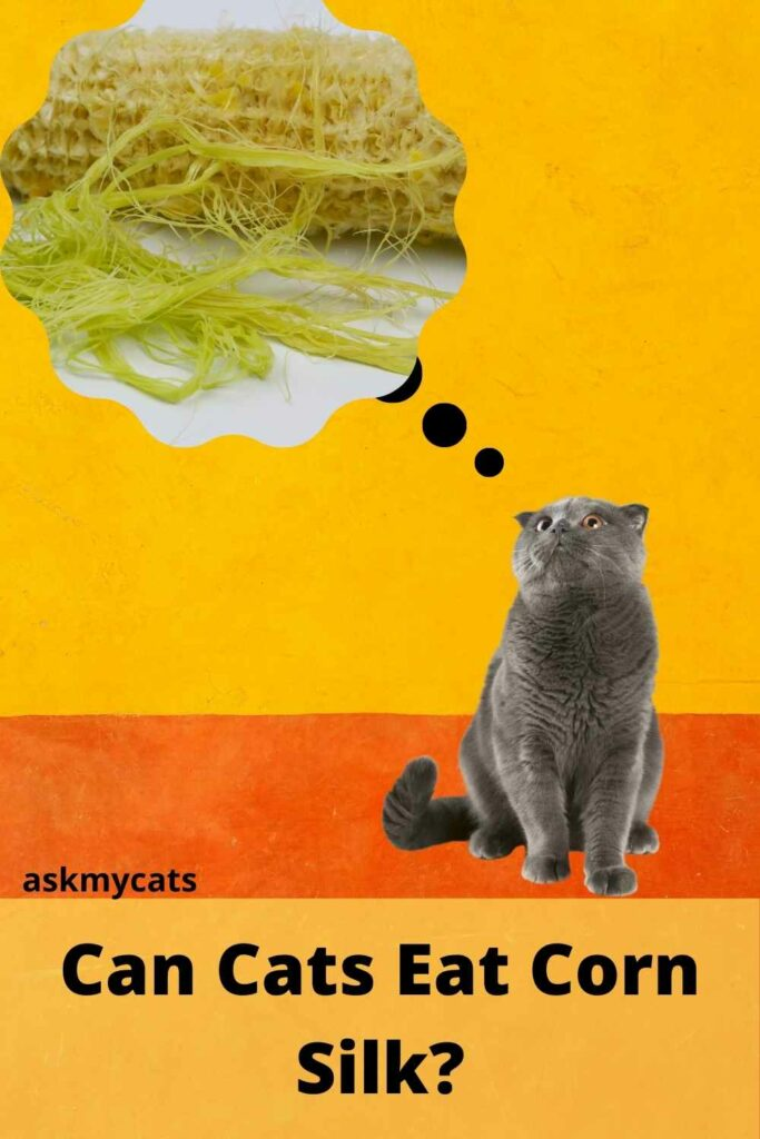Can Cats Have Corn Silk?