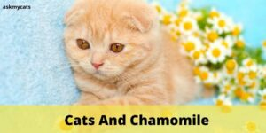 Cats And Chamomile: Know About Chamomile Before Serving It To Your Cat!