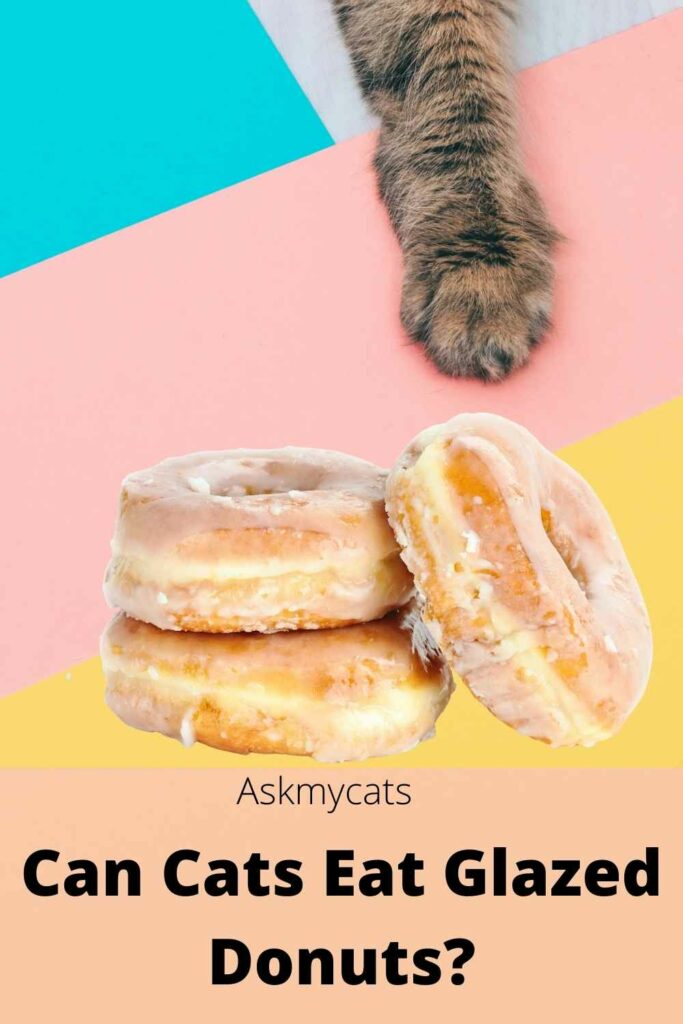 Can Cats Eat Glazed Donuts?