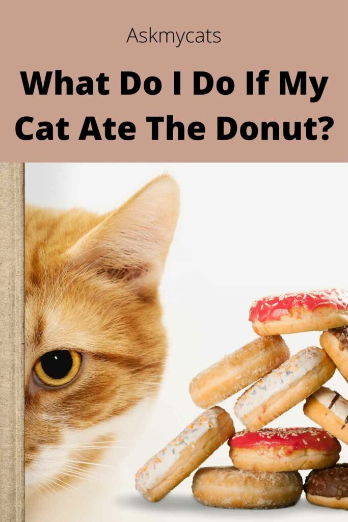What Do I Do If My Cat Ate The Donut?