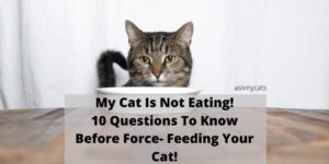 My Cat Is Not Eating! 10 Points To Know Before Force Feeding Your Cat!