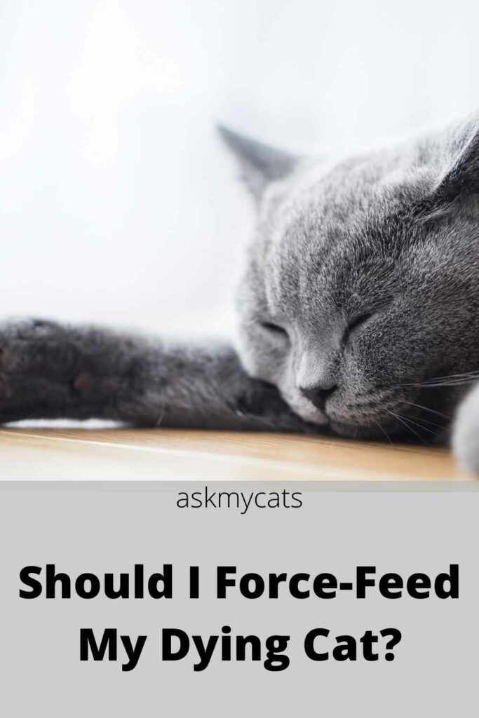 should i force-feed my dying cat?