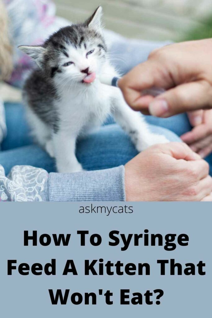 how to syringe feed a kitten that won't eat?