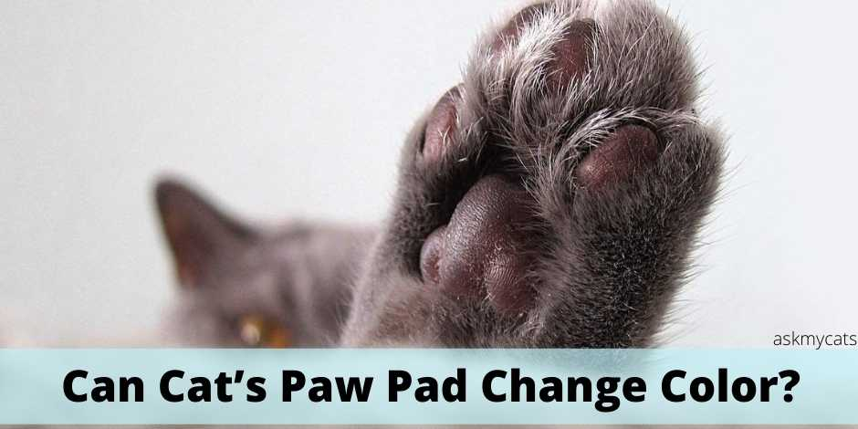 Can cat's paw pad change color?