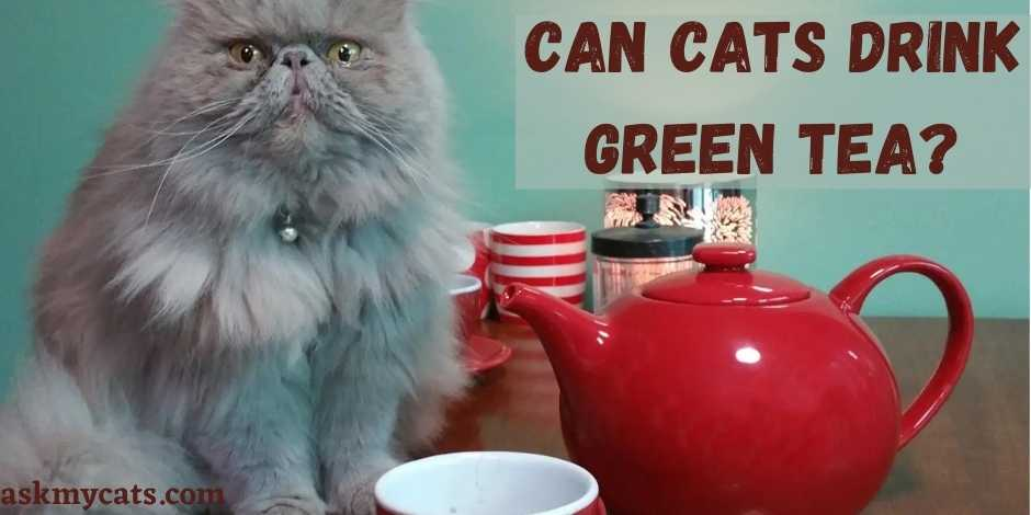 Can Cats Drink Green Tea?