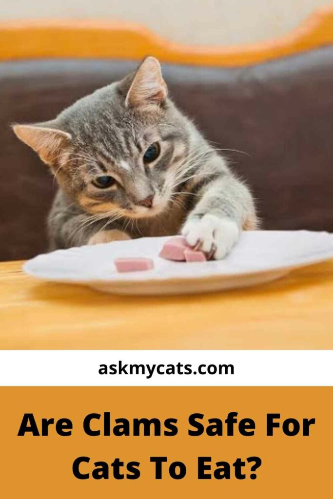 Are Clams Safe For Cats To Eat?