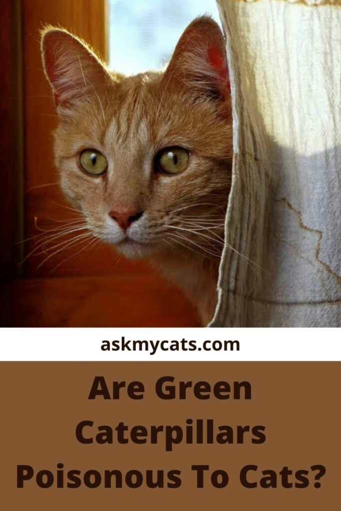 Are Green Caterpillars Poisonous To Cats?