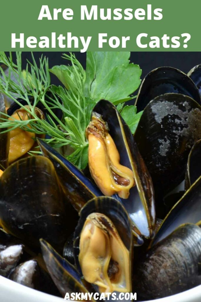 are mussels healthy for cats?
